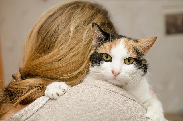 bonnes raisons de devenir famille d'accueil pour animaux