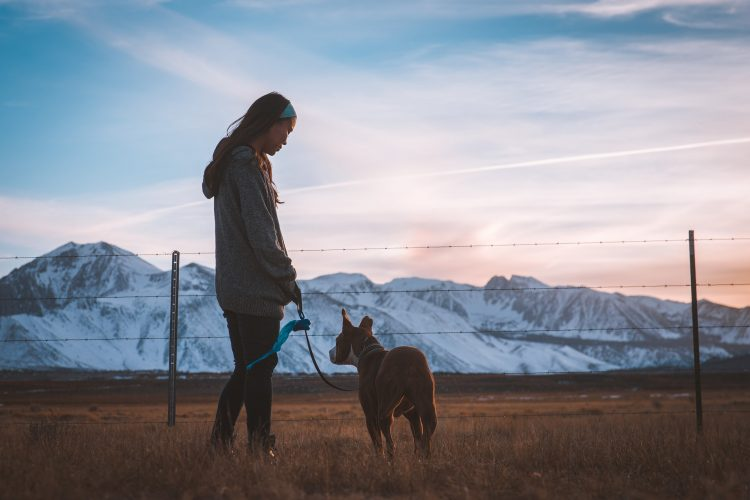 lyon comment devenir famille d'accueil pour animaux