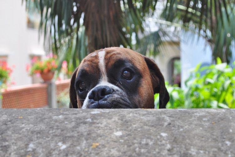 chien mauvais comportement à ne pas encourager