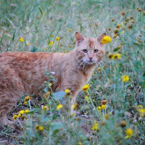 Quelles sont les intoxications les plus fréquentes chez les animaux?