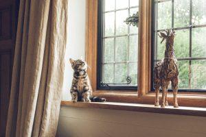 Locataire : les animaux peuvent-ils être interdits dans un bien en location ?