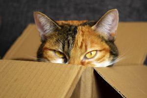 Pourquoi nos chats sont-ils passionnés par les cartons ?
