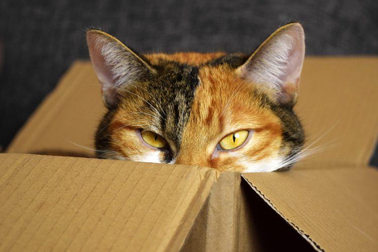 pourquoi les chats aiment les cartons