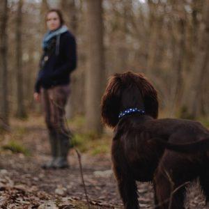6 choses à avoir pour partir en promenade avec son chien