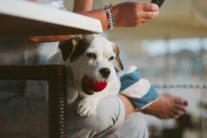 Tindog : l'application de rencontres entre propriétaires de chiens