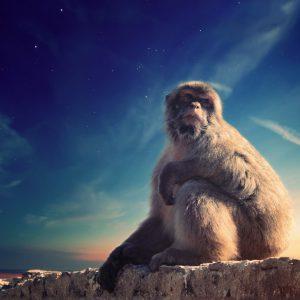 Expérimentation animale: 8 chiffres alarmants à connaître