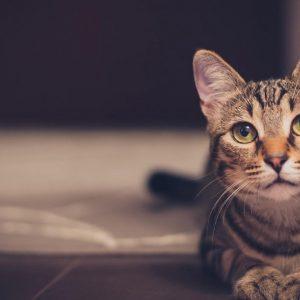 5 raisons qui expliquent que votre chat vous réveille la nuit