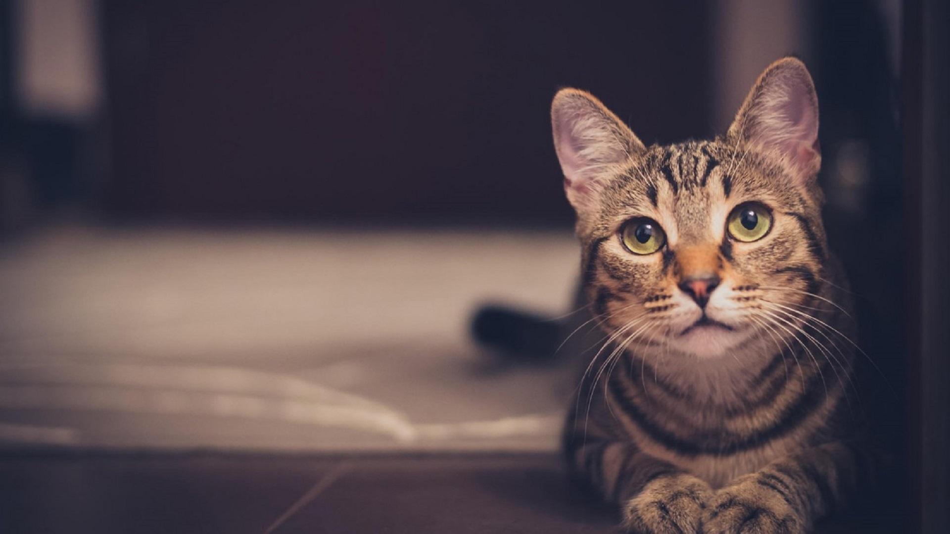 pourquoi mon chat me reveille