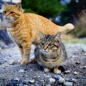 6 conseils pour accueillir un deuxième chat chez soi