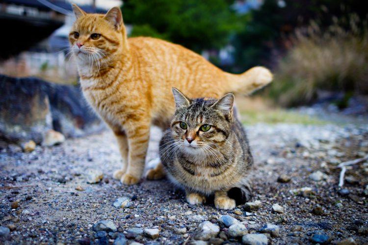 faire cohabiter deux chats conseils