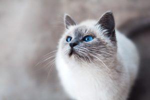 7 points qui expliquent le fait que votre chat évite sa litière