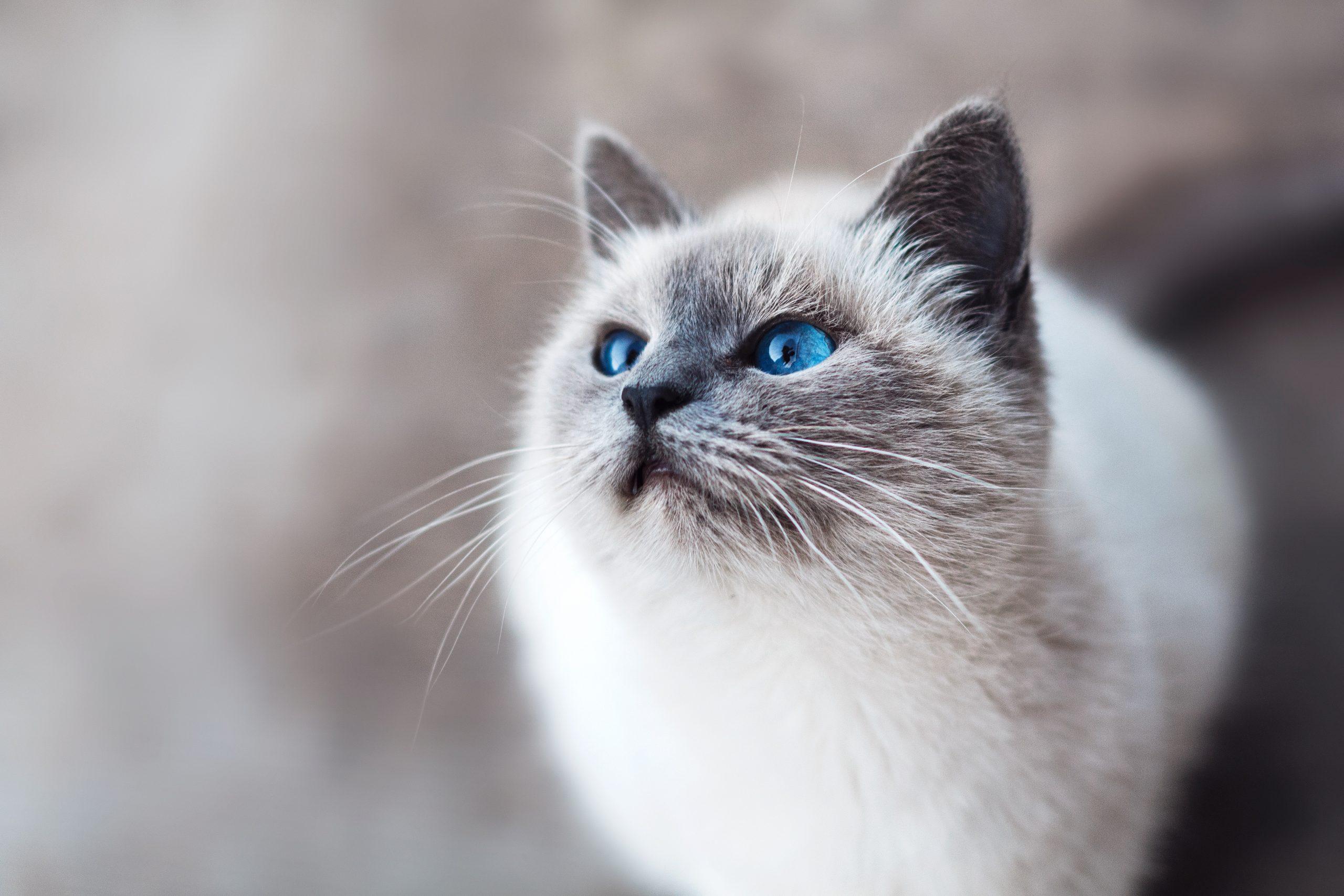 raisons chat ne va pas dans la litière