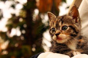 6 problèmes que peuvent présenter les chats qui n'ont pas été sevrés