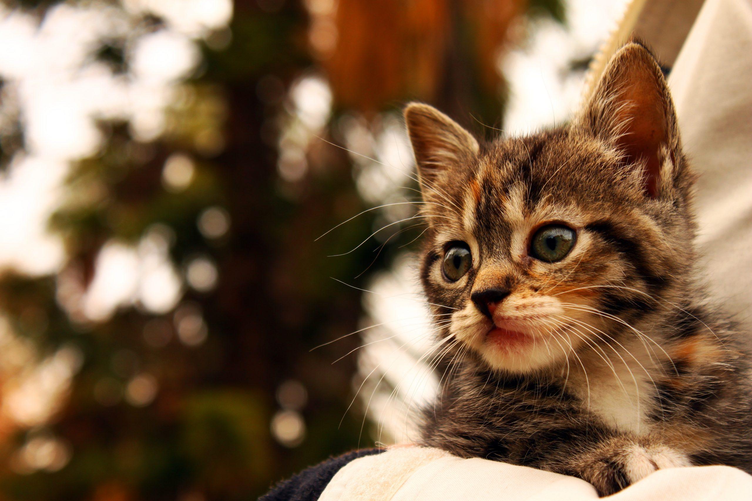 chat problème à cause d'un manque de sevrage