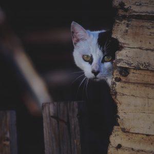 Comment faire pour gagner la confiance d'un chat errant?