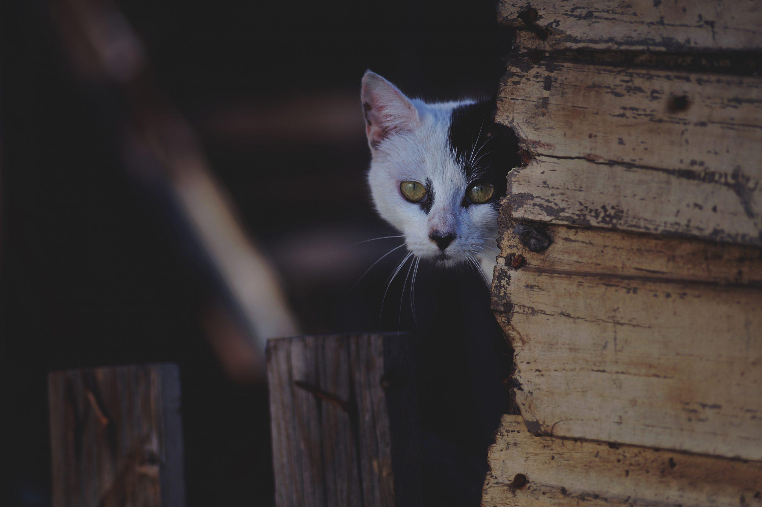 comment approcher un chat errant