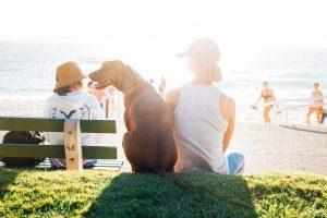 6 avantages sur la santé qu'apporte un animal de compagnie