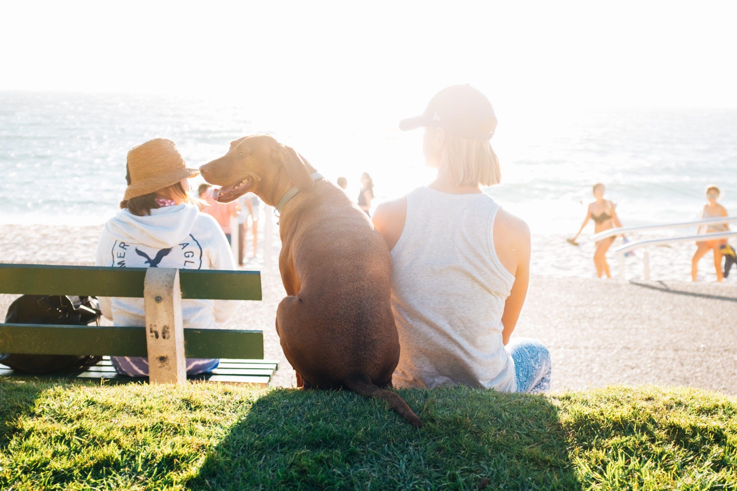 avantages animal de compagnie