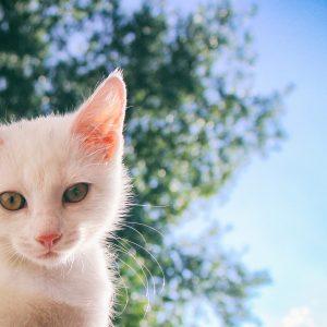 7 idées reçues à propos des chats