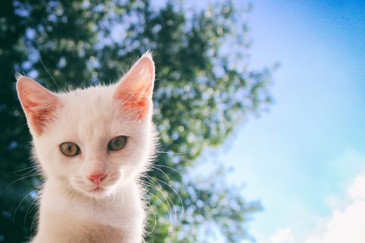 rumeurs sur les chats