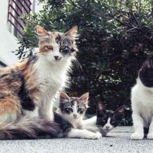 Que faire lorsque l'on trouve une portée de chatons ?