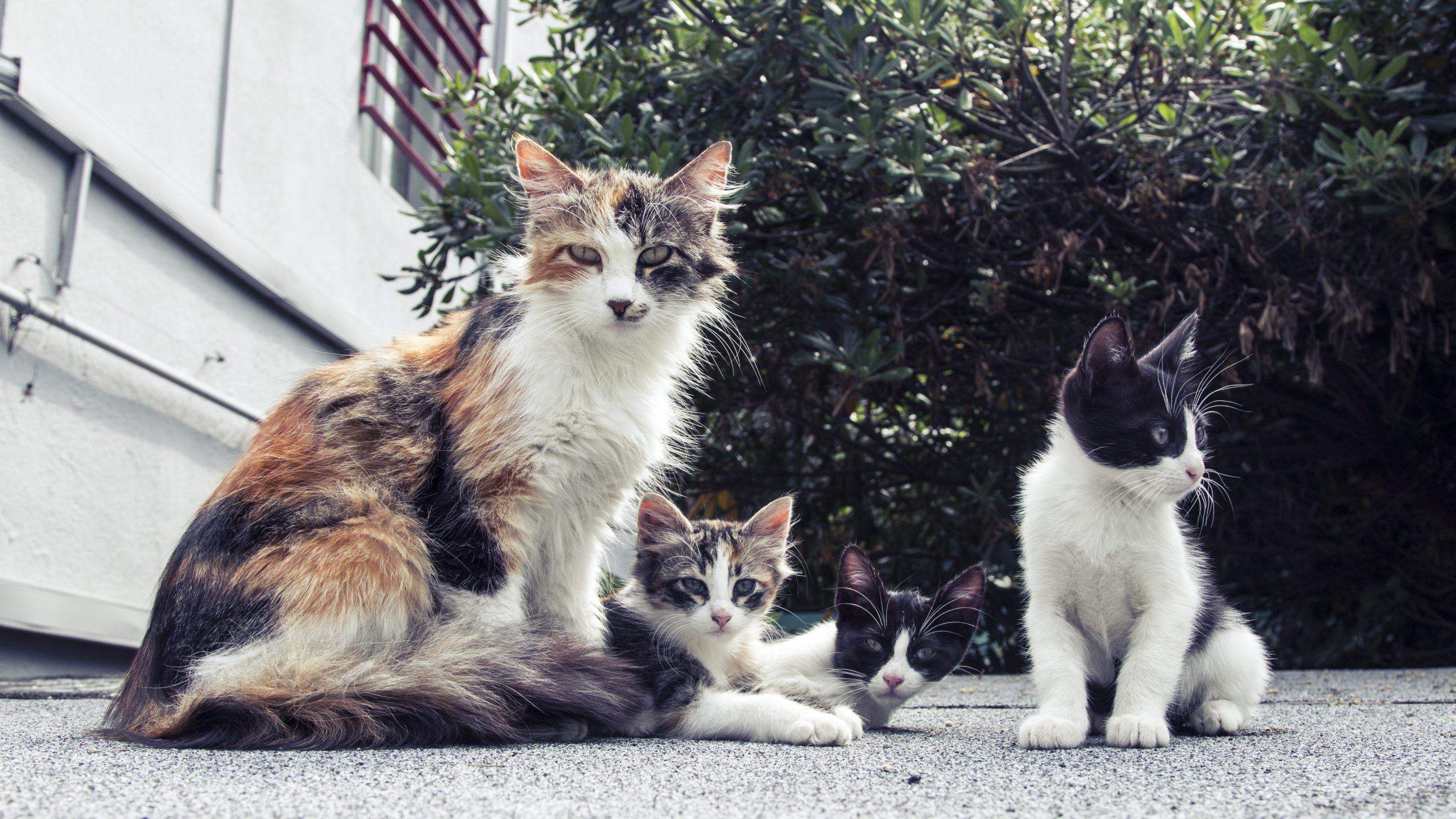 que faire quand on trouve une portée de chatons