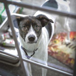 Euthanasie de convenance : quel est le rôle du vétérinaire ?