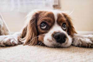 5 accessoires à avoir pour aider son chien senior