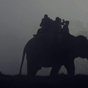 7 «loisirs» qui sont particulièrement cruels pour les animaux