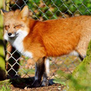Quelles alternatives à la captivité pour découvrir les animaux?