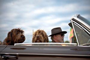 3 choses à faire quand son chien prend de l'âge