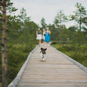 DogBuddy: l'application qui vous aide à trouver un dog-sitter