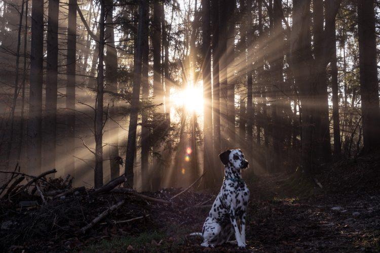 conseils promener chien nuit