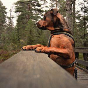 Abandonner son animal en association: ce qu'il faut savoir