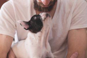 10 façons d'aider gratuitement la cause animale