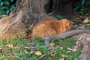 Interview : Rencontre avec l'une des bénévoles du réseau Pet Alert