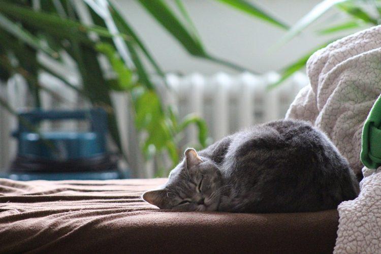 aménager l'espace pour son chat