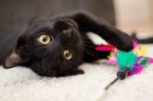 Cosmo chat : le commerce en ligne ouvre ses portes