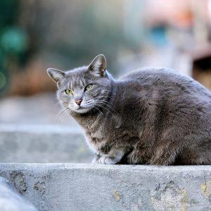 5 choses à savoir sur les vaccins du chat