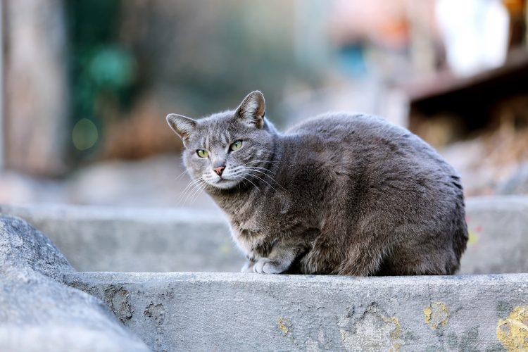 à savoir sur les vaccins du chat