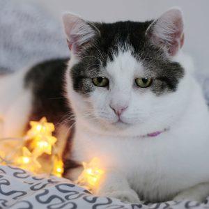 Le FELIWAY: le meilleur allié des chats stressés