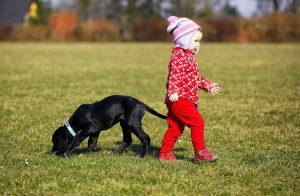 Chiens : 5 choses à apprendre à son enfant pour bien réagir