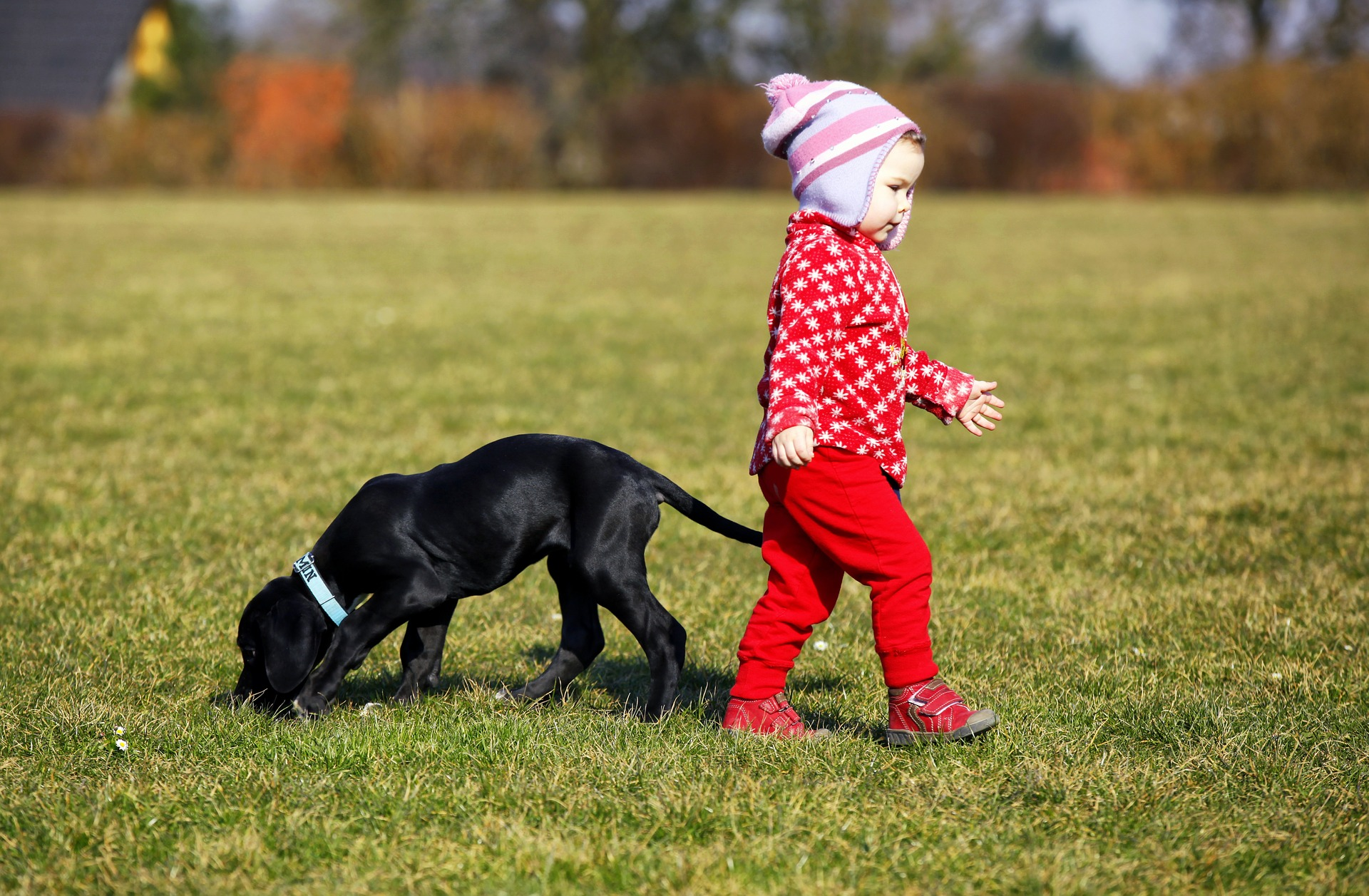 chiens choses apprendre enfants