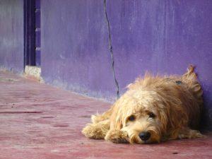 France : 4 faits inquiétants sur l'abandon des animaux