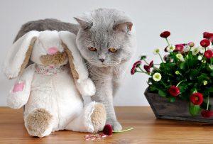 Pourquoi est-il important de laisser des jeux à la disposition de son chat?