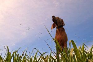 Printemps : les dangers à prendre en compte pour votre chien