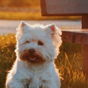 8 choses à savoir sur la démence chez le chien