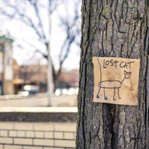 Pet Alert: le réseau qui aide à retrouver les animaux perdus