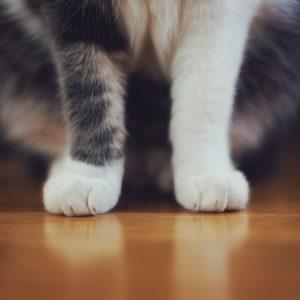 4 signes qui peuvent prouver que votre chat est en état de stress