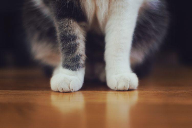 repérer le stress chez le chat
